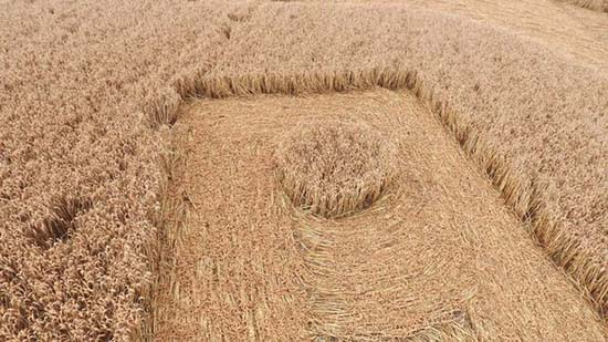 circulo en los cultivos en forma de esvastica - Agricultor británico descubre un enorme círculo en los cultivos en forma de Esvástica
