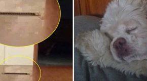 Mujer graba el fantasma de su perra que regresa para perdonarla por haberla sacrificado