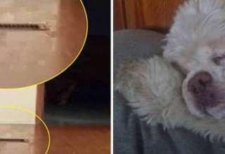 fantasma perra 320x220 - Mujer graba el fantasma de su perra que regresa para perdonarla por haberla sacrificado