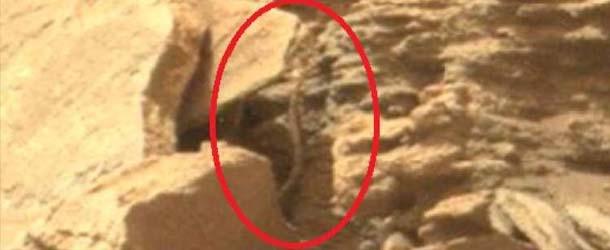 Rover de la NASA encuentra una serpiente extraterrestre en Marte