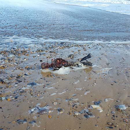 Cadáver sirena playa