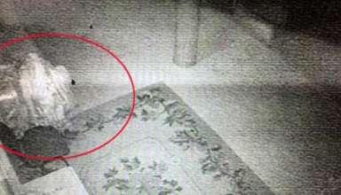 lama resucita 89 anos despues 384x220 - Imágenes demuestran cómo un lama resucita 89 años después de su muerte