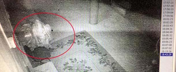 lama resucita 89 anos despues - Imágenes demuestran cómo un lama resucita 89 años después de su muerte