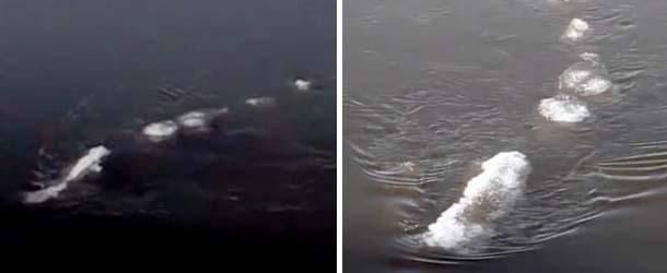 misteriosa criatura rio alaska - Funcionario del gobierno graba una misteriosa criatura en un ríode Alaska