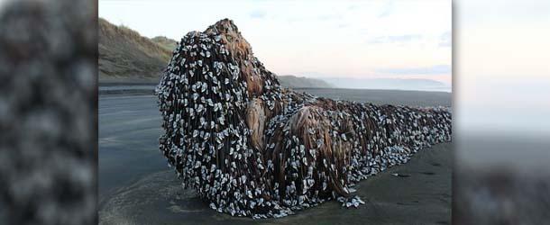 misteriosa criatura nueva zelanda - Aparece una misteriosa criatura varada en una playa de Nueva Zelanda