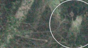 Una foto muestra una niña huérfana fantasma escondida en un bosque del Reino Unido
