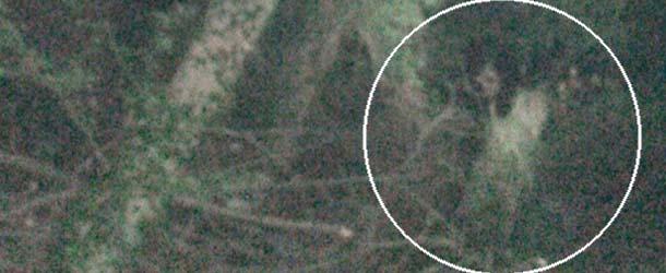 nina huerfana fantasma - Una foto muestra una niña huérfana fantasma escondida en un bosque del Reino Unido
