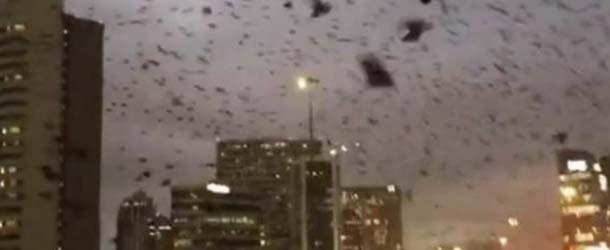 aves negras houston - Miles de aves negras con un extraño comportamiento sobrevuelan el cielo de Houston, ¿una señal apocalíptica?