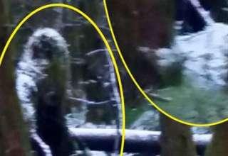 bigfoot bosque irlandes 320x220 - Una mujer fotografía una misteriosa criatura similar a un Bigfoot en un bosque irlandés