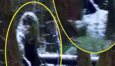 bigfoot bosque irlandes 384x220 - Una mujer fotografía una misteriosa criatura similar a un Bigfoot en un bosque irlandés