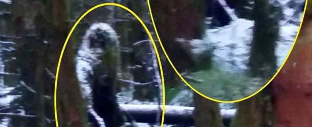 Una mujer fotografía una misteriosa criatura similar a un Bigfoot en un bosque irlandés