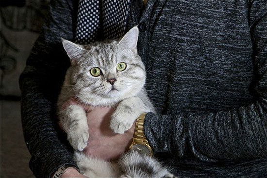 clarividente gato psiquico - Clarividente rusa compra un gato psíquico por 78.000€