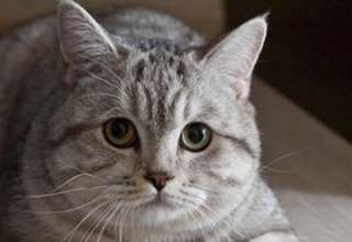 gato psiquico 320x220 - Clarividente rusa compra un gato psíquico por 78.000€