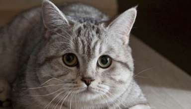 gato psiquico 384x220 - Clarividente rusa compra un gato psíquico por 78.000€