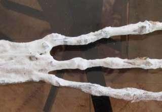 mano extraterrestre 320x220 - Descubren una mano extraterrestre en una cueva en Perú