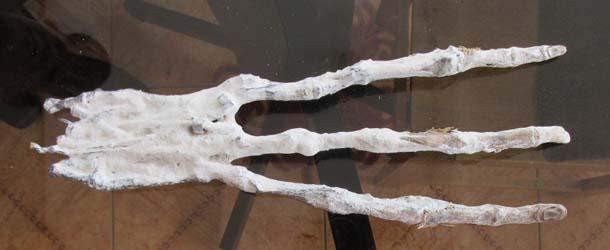Descubren una mano extraterrestre en una cueva en Perú