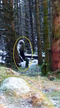 misteriosa criatura bosque irlandes - Una mujer fotografía una misteriosa criatura similar a un Bigfoot en un bosque irlandés