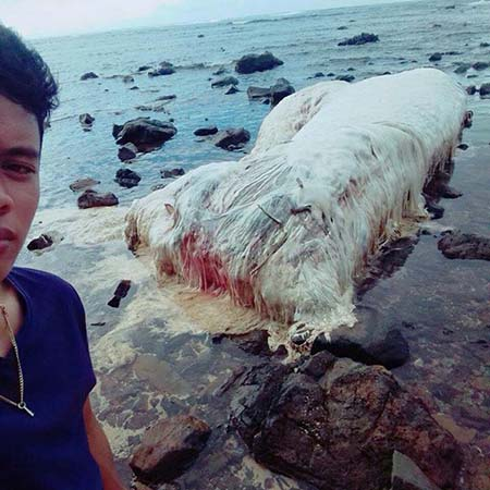 monstruo playa filipinas - Hallan un horrible monstruo varado en una playa de Filipinas