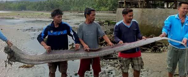 La misteriosa aparición de peces remos anuncian un gran terremoto en Filipinas