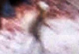 pequeno humanoide extraterrestre chile 320x220 - Fotografían un pequeño humanoide extraterrestre caminando en un parque de Santiago de Chile