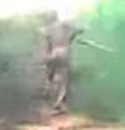 criatura mutante selva indonesia - Motoristas tienen un encuentro con una criatura mutante en una selva de Indonesia