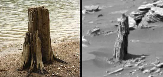 arbol petrificado en marte - Imagen de la NASA muestra los restos de un árbol petrificado en Marte