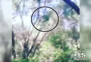 misteriosa criatura california 320x220 - Las autoridades advierten de la presencia de una misteriosa criatura en un bosque de California