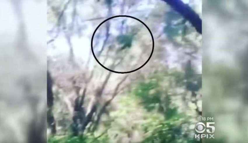 misteriosa criatura california 850x491 - Las autoridades advierten de la presencia de una misteriosa criatura en un bosque de California