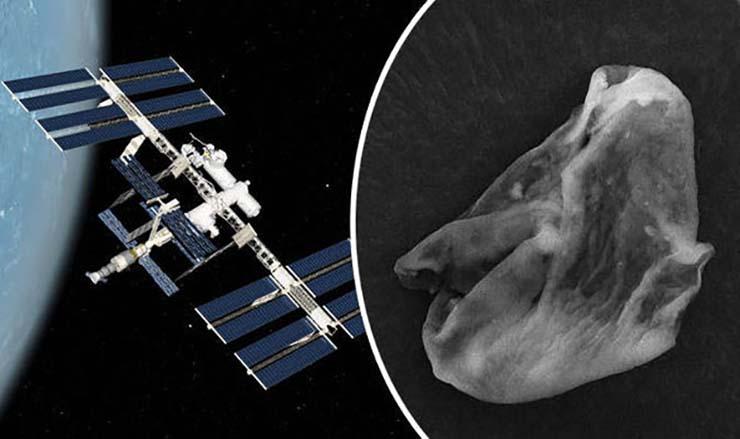 vida extraterrestres iss - Científicos rusos encuentran formas de vida extraterrestres en la superficie de la Estación Espacial Internacional
