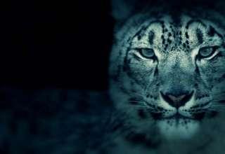 zoologicos embrujados 320x220 - Zoológicos embrujados en Estados Unidos, recintos para animales y fantasmas