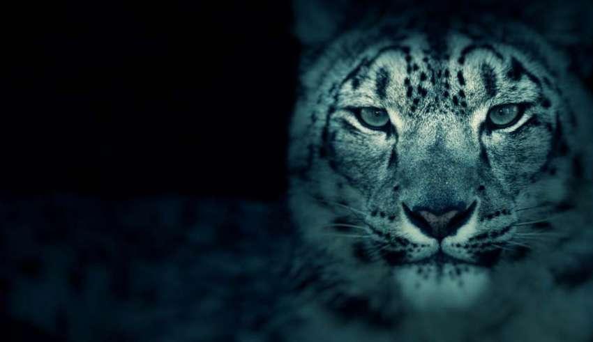 zoologicos embrujados 850x491 - Zoológicos embrujados en Estados Unidos, recintos para animales y fantasmas