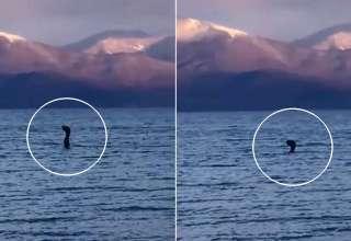 extrana criatura albania 320x220 - Varias personas ven una extraña criatura en un lago de Albania, ¿se trata de la versión europea de Nessie?