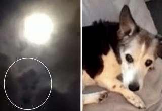 perro fallecido 320x220 - Una mujer ve el rostro de su perro fallecido en una fotografía que hizo a la luna llena