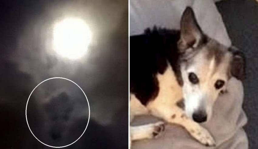 perro fallecido 850x491 - Una mujer ve el rostro de su perro fallecido en una fotografía que hizo a la luna llena