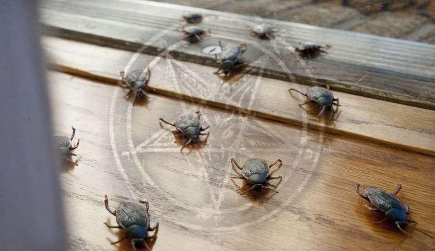 plagas insectos brujeria 850x491 - Plagas de insectos en una casa, ¿señal de brujería?