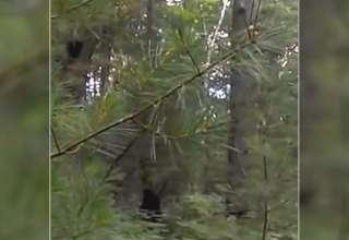 bigfoot michigan 320x220 - Increíble vídeo muestra un Bigfoot con sus crías en un bosque de Míchigan