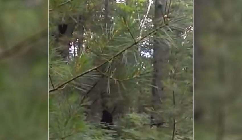 bigfoot michigan 850x491 - Increíble vídeo muestra un Bigfoot con sus crías en un bosque de Míchigan