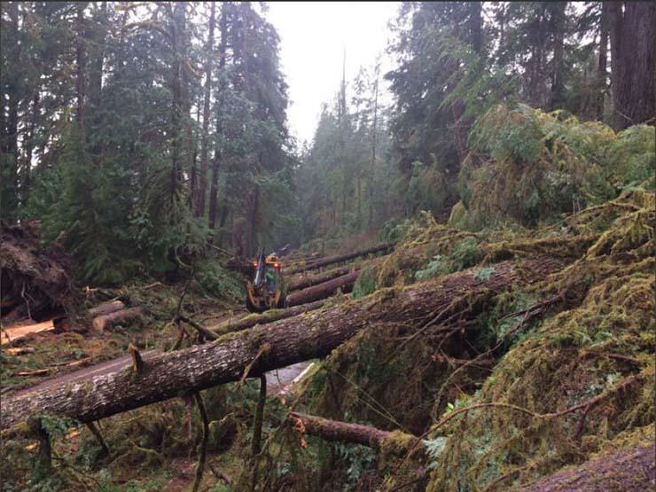 fuerza invisible washington - Una misteriosa fuerza invisible derriba cientos de árboles gigantescos en el estado de Washington