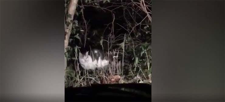 gato angel de la guarda - Misterioso gato aparece de la nada para guiar a japoneses perdidos a través de un peligroso bosque, ¿un ángel de la guarda?