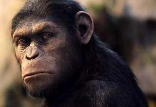 hibrido humano chimpance 320x220 - Reconocido científico asegura que un híbrido humano y chimpancé nació en un laboratorio estadounidense