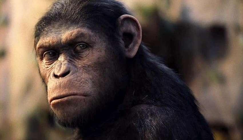 hibrido humano chimpance 850x491 - Reconocido científico asegura que un híbrido humano y chimpancé nació en un laboratorio estadounidense