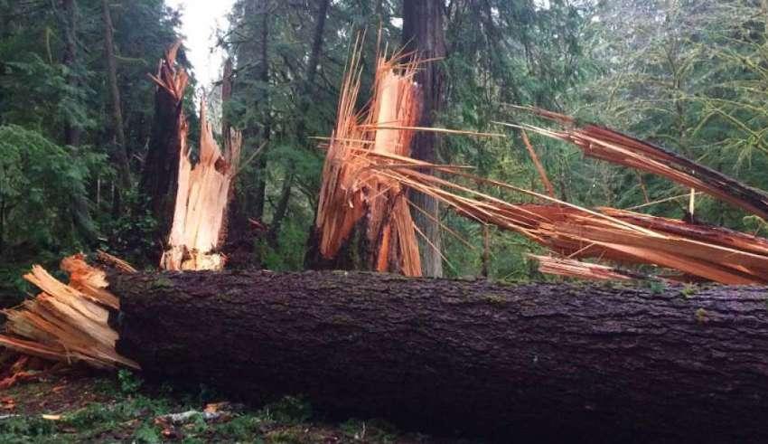misteriosa fuerza invisible washington 850x491 - Una misteriosa fuerza invisible derriba cientos de árboles gigantescos en el estado de Washington