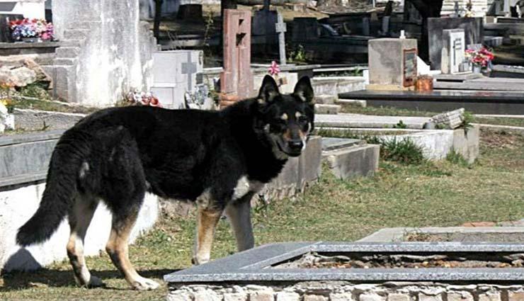 muere capitan perro - Muere 'Capitán', el perro que pasó 11 años junto a la tumba de su dueño