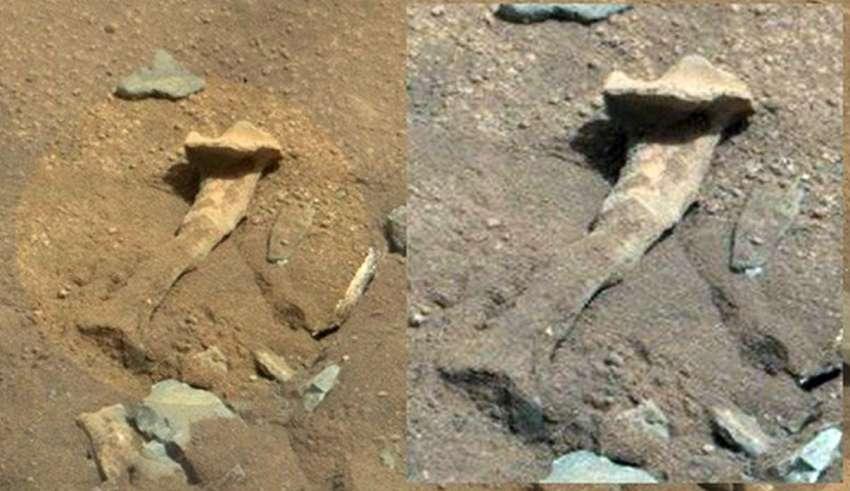 nasa extraterrestre marte 850x491 - Reconocido científico acusa a la NASA de encubrir la existencia de vida extraterrestre en Marte