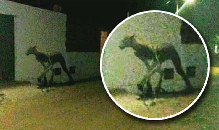 Monster beast photograph mystery Argentina 946844 - Fotografían un monstruo mitad hombre y mitad criatura en las calles de una ciudad de Argentina