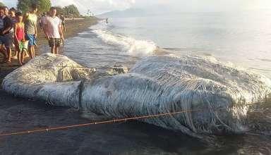 misteriosa criatura peluda filipinas 384x220 - Hallan una misteriosa criatura peluda en una playa de Filipinas y aseguran que se trata del presagio de una catástrofe