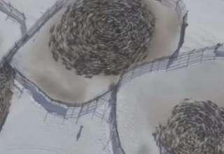 renos patrones circulares rusia 320x220 - Vídeomuestra manadas de renos moviéndose en extraños patrones circulares en Rusia y los científicos no sabe por qué