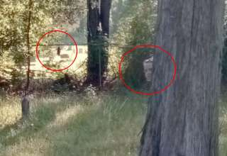 figuras fantasmales cementerio 320x220 - Descubren dos figuras fantasmales en un histórico cementerio a través de Google Street View