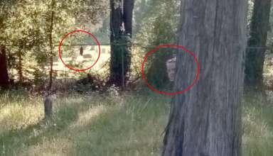 figuras fantasmales cementerio 384x220 - Descubren dos figuras fantasmales en un histórico cementerio a través de Google Street View