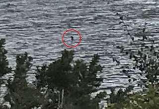 monstruo del lago ness 320x220 - Una niña toma la mejor foto del monstruo del lago Ness de la historia